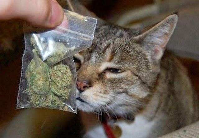 Image result for Кот притащил домой наркотики