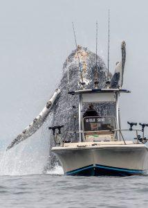 На вирусном видео показан прыжок гигантского кита рядом с рыболовецким судном