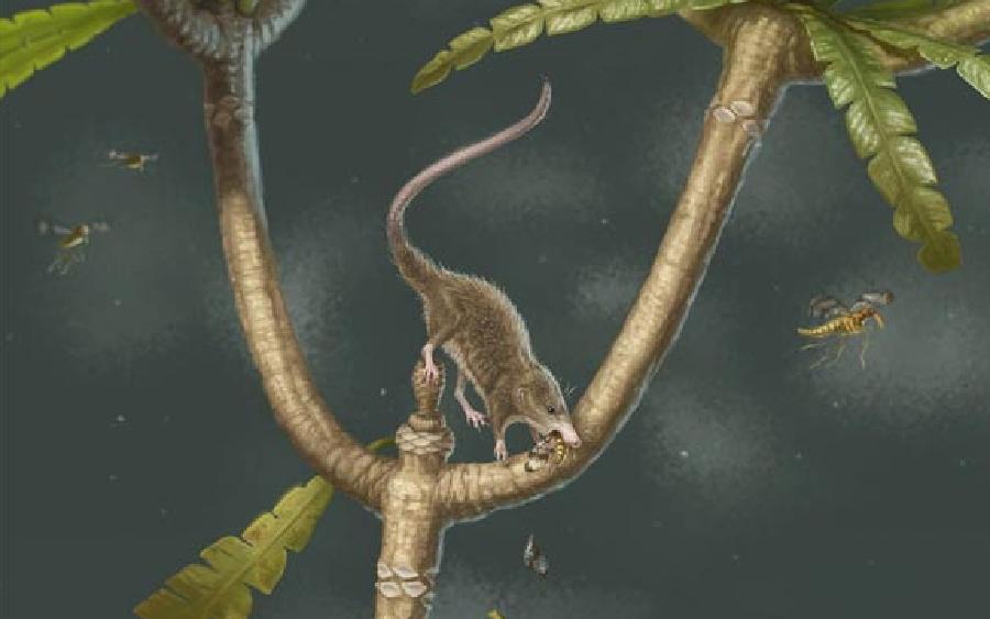 В Китае найдены древнейшие останки млекопитающего