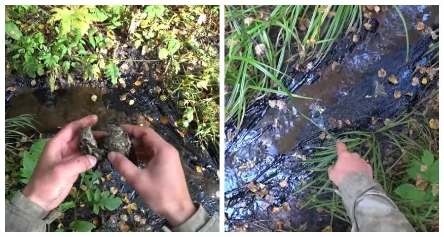 В Свердловской области недалеко от военного городка массово гибнут птицы