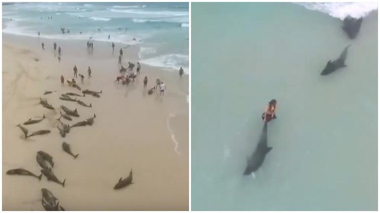 На берег острова массово выбросились дельфины