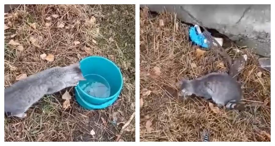 В Сызрани рыбачащий в ведре кот был заснят на видео