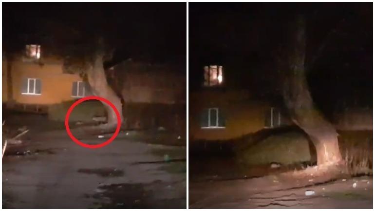 Под Брянском сняли видео встречи кота и лисы