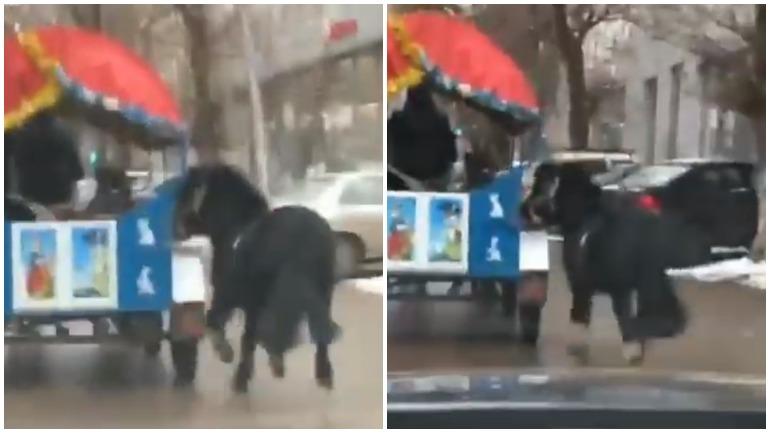 Хозяев жестоко привязанного пони ищут в Саратове