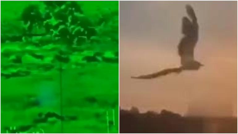Американская противотанковая ракета взорвалась из-за птицы