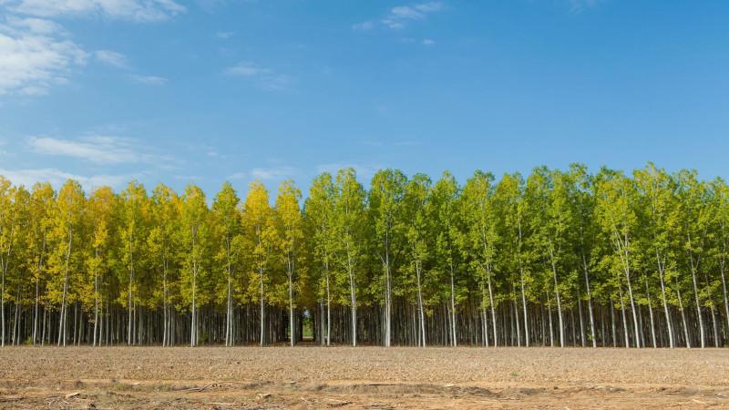 Европейское исследование: Восстановление лесов в Европе позволит увеличить количество осадков