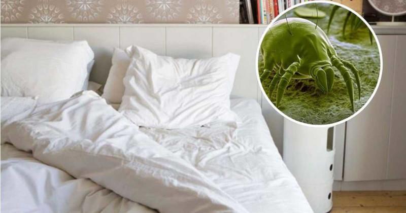 Объяснение микробиолога: ваша постель может быть не такой чистой, как вы думаете